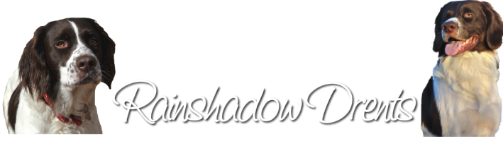 Rainshadow Drents